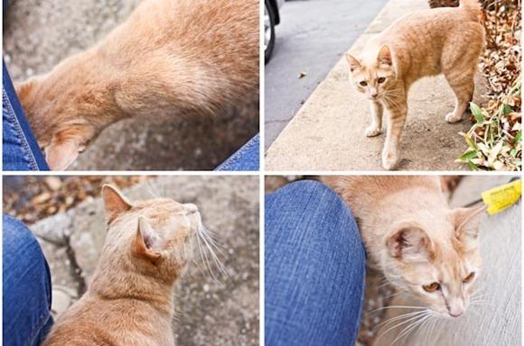 KittyTigerBlog