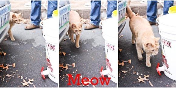 Meow-2Blog