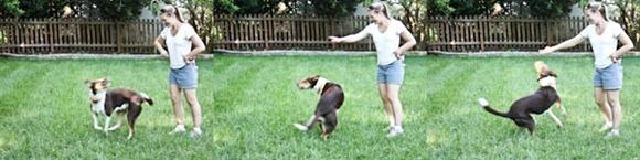 DoggieswirlsBlog