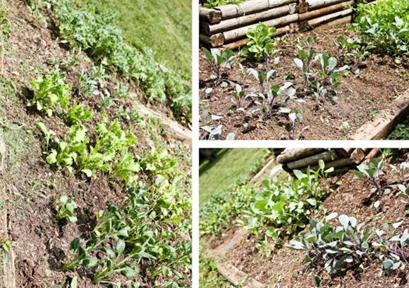 GardeniaBlog