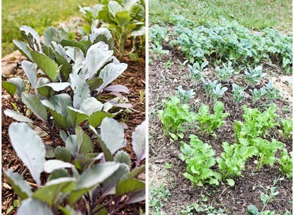 Plants2Blog