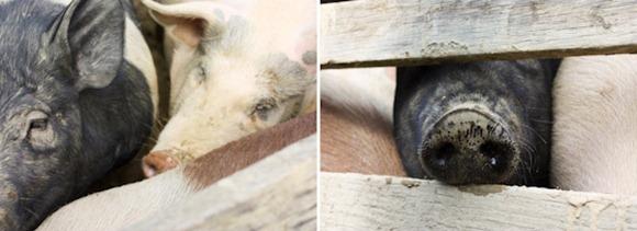 PiggiesBlog