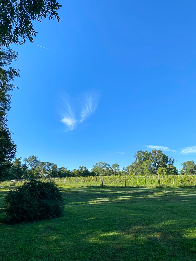meriwether springs vineyard view