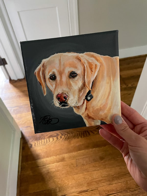 portrait of gus the dog from Chewy