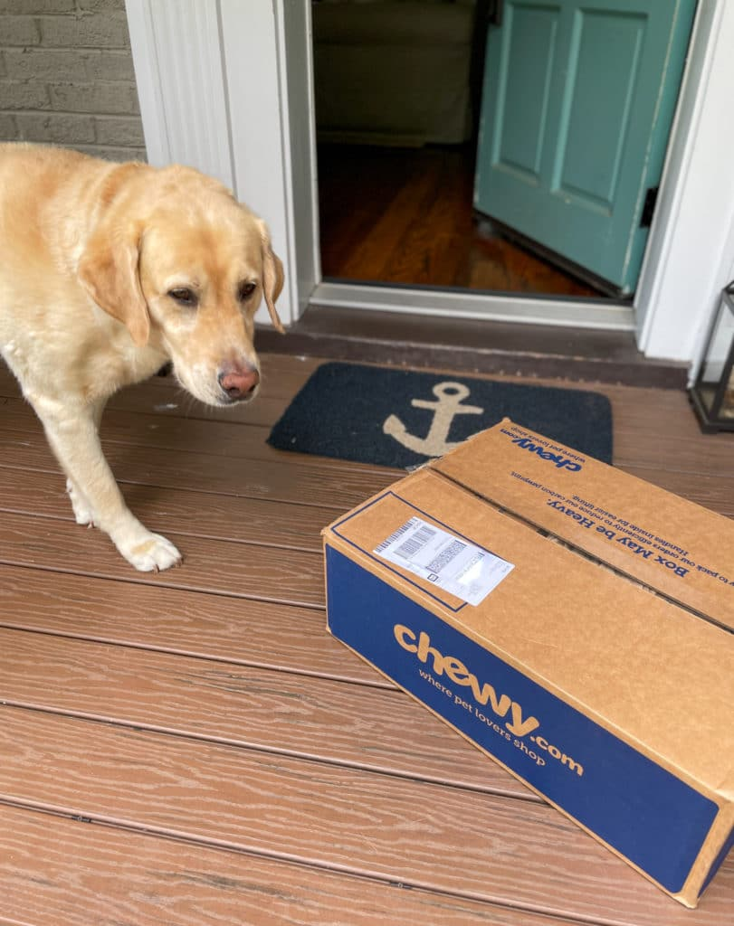 lab sniffing Chewy box on doorstep