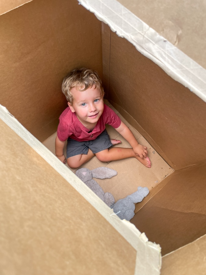 Birch playing in the box