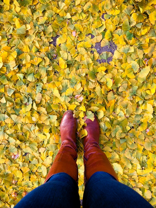 Fall leaves & boots: getting back to healthy