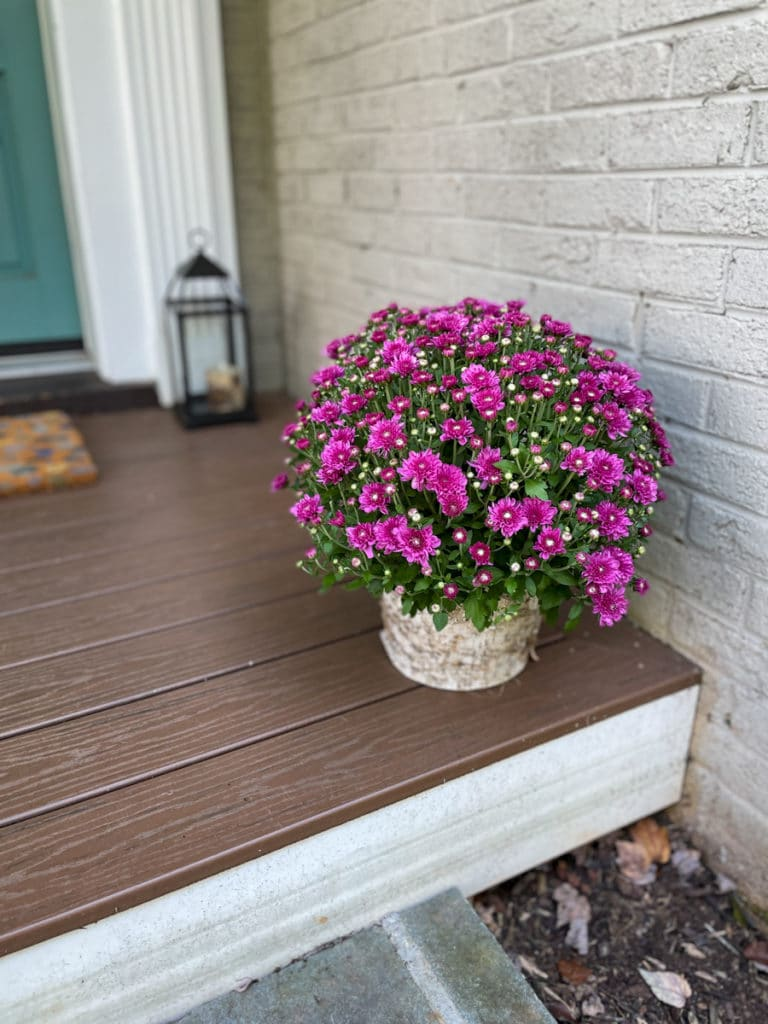 Whats New in KERF Land | New mums on the porch